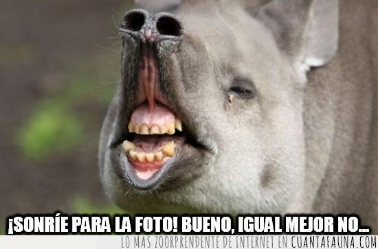 foto,mejor sin sonrisa,nariz levantada,sonreir,sonrisa,tapir