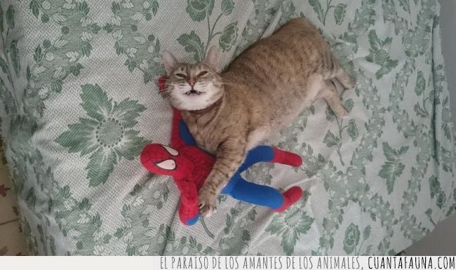 gato,muñeco,peluche,spider-man,tumbado