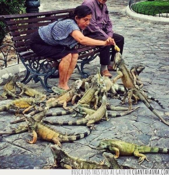 abuelas,iguanas,mexico,parque