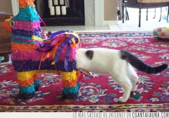 gato,nacer,Nyan cat,piñata