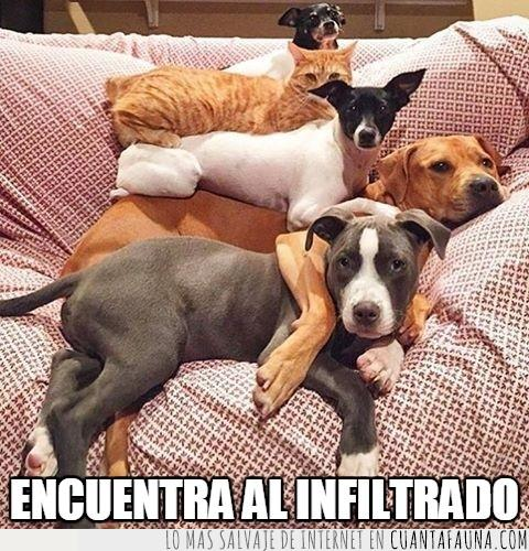 apilados,en orden,gato,intruso,montaña,perros