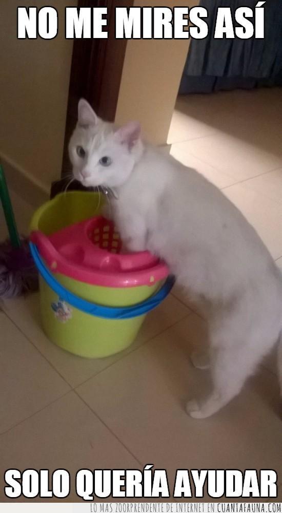 ayuda,cubo de fregar,fregona,gato,limpieza
