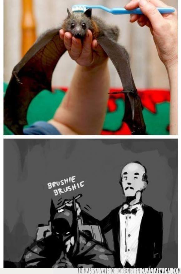 Alfred,Batman,cepillar,cepillo,murciélago,zorro volador