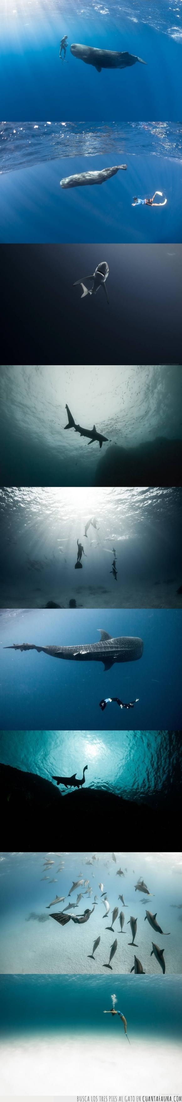 animales,belleza,delfines,mar,oxígeno,peces,precioso,submarino,tiburones,vida