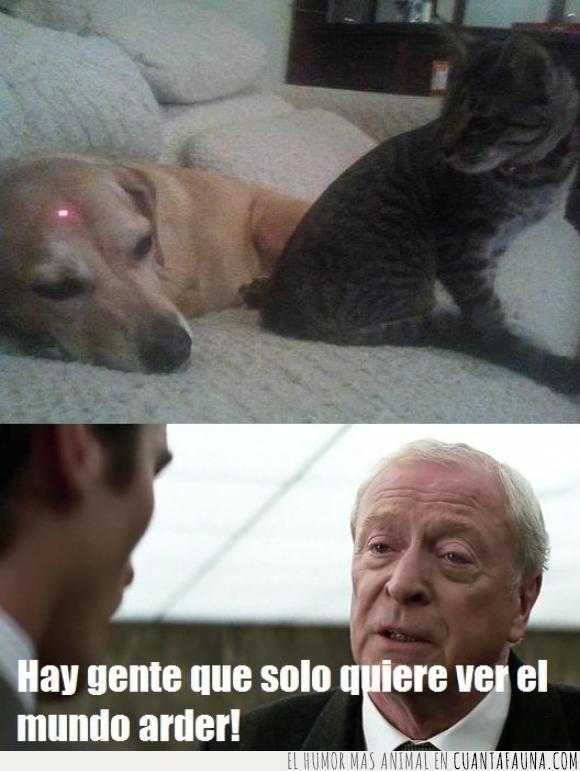 apuntar,caos,gato,láser,pelea,perro