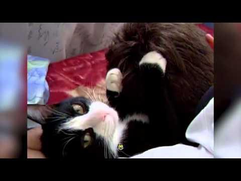 32231 - Te ahorrarías una pasta en masajistas capilares si tuvieras a este gato