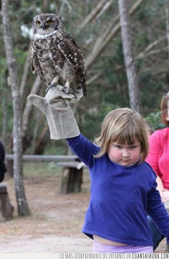 ave,bosque,Búho,cara de pura maldad,guante,niña,rapaz