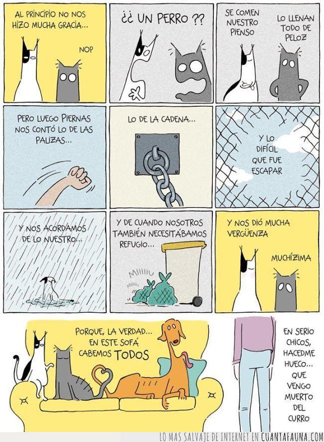 adoptar,compasión,convivencia,gatos y perro,lo malo nos une,maltrato,oportunidad