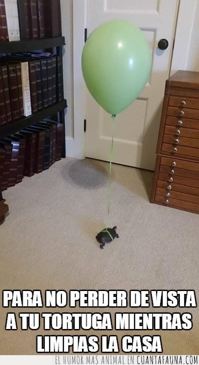 asi seguro que no te pierdes,globo,tortuga