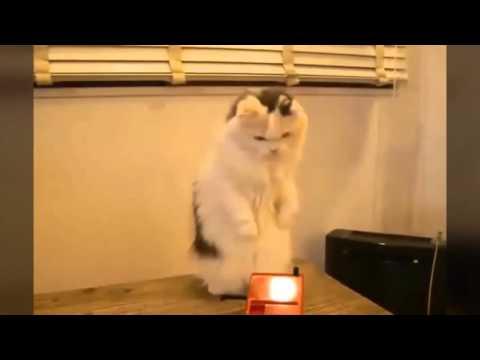 32393 - ¿Sabes qué es un theremin? Este gato tampoco lo sabía pero lo acaba de descubrir