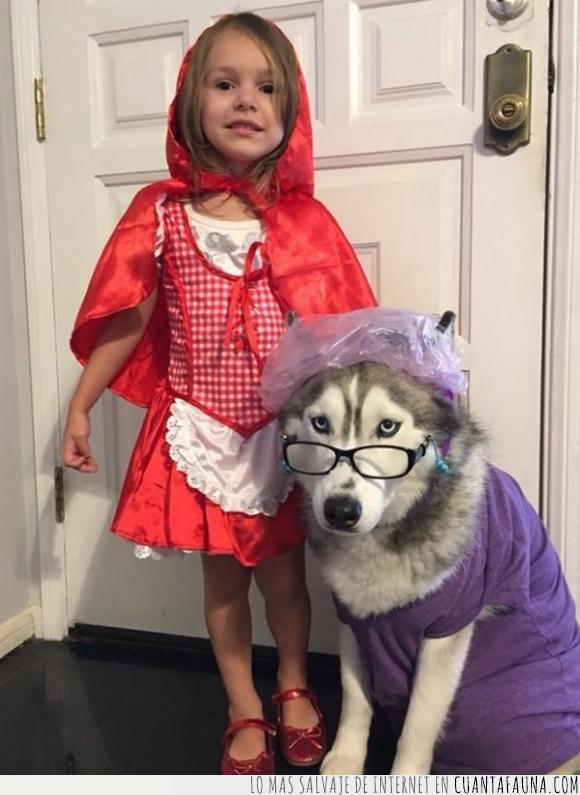 abuela,Caperucita,Caperucita Roja,disfraz,gafas,Halloween,husky,perro