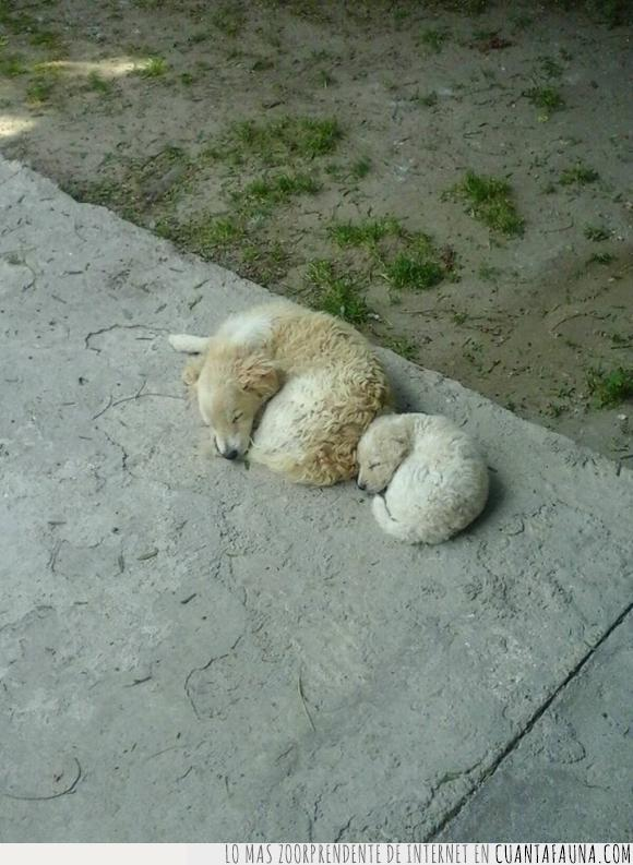 camino,dormidos,hijo,igual,mismo,padre,papá,perro,posición