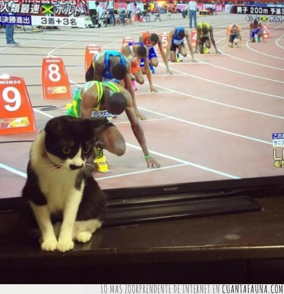 atletismo,carrera,cursa,gato,lugar,mirar,posición,televisión