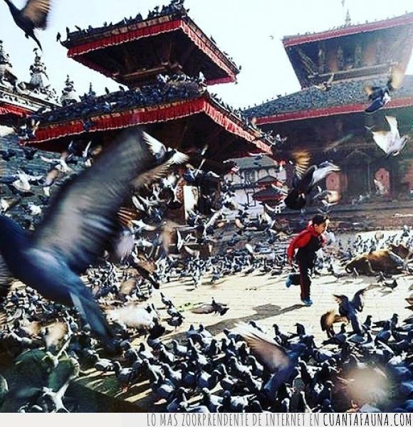 arroz,comida,miedo,multitud,niño entre palomas,pagodas,Palomas,volar
