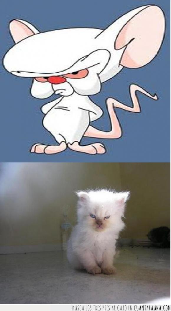 caricatura,cómic,dibujos,gato,historieta,humor,Pinky y cerebro,ratones