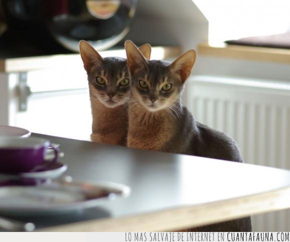 fallo,Gato,gemelo,igual,matrix,repetir