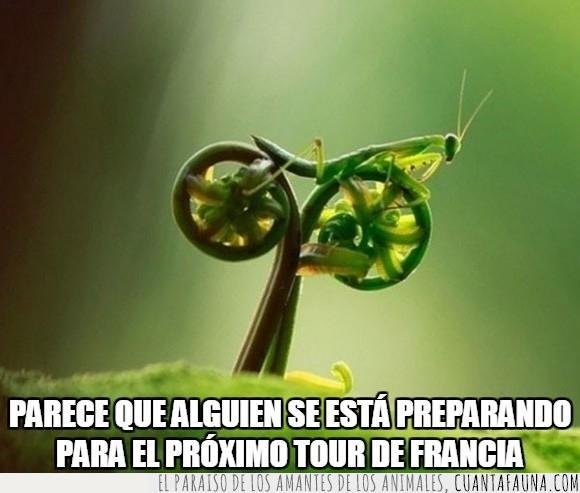 bicicleta,mantis religiosa,planta,todo muy a juego,tour de francia