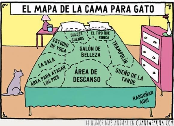 arañar,cama,descanso,dormir,gato,habitación,Hilary B. Price,mapa,molestar,partes