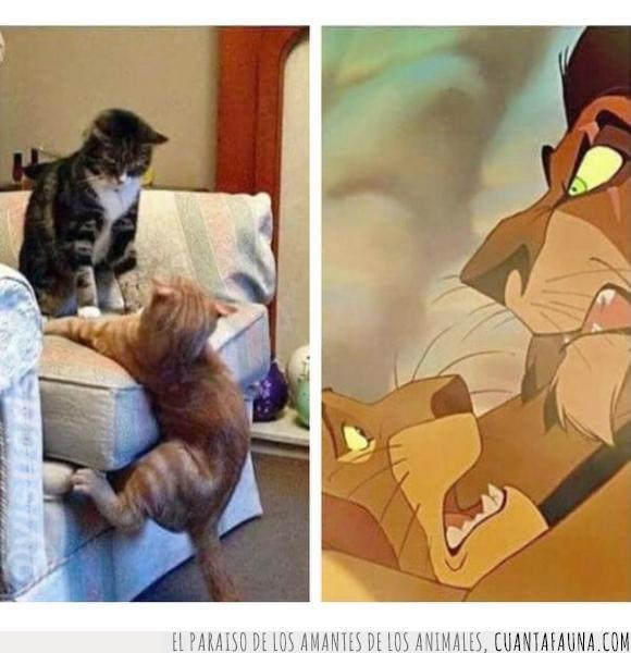 caída,ficción,gatos,mufasa,pelea,realidad,rey león,scar,sofá