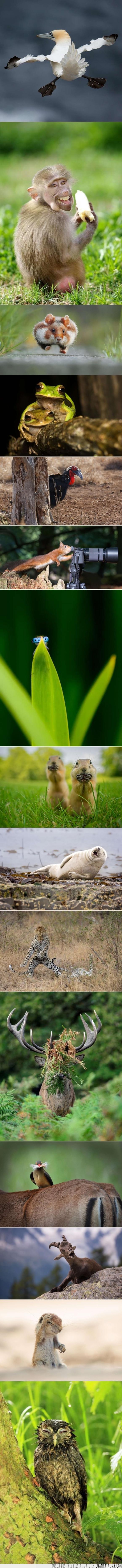 ardilla,Ave,brillantes,cabra,Comedy Wildlife Photography Awards,divertidos,foca,hamster,lechuza,leopardo,mono,mosca,sapo,venado,vida silvestre