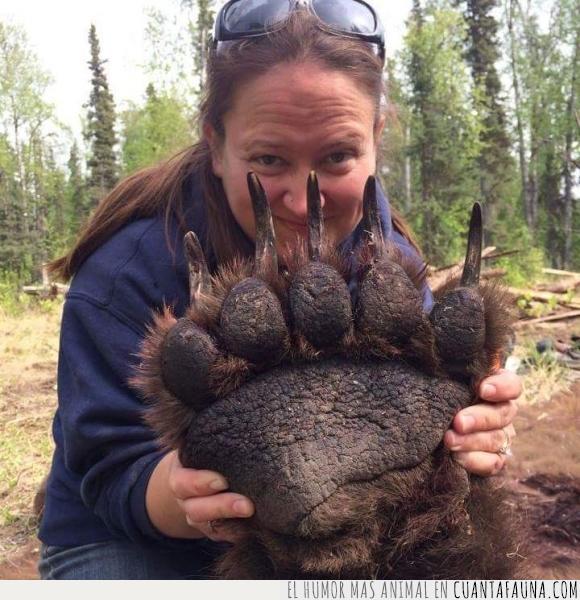 espero que sea una veterinaria y no una cazadora,garras,grizzly,no estaba muerto,Oso,pardo,plantígrado,uñas,zarpa