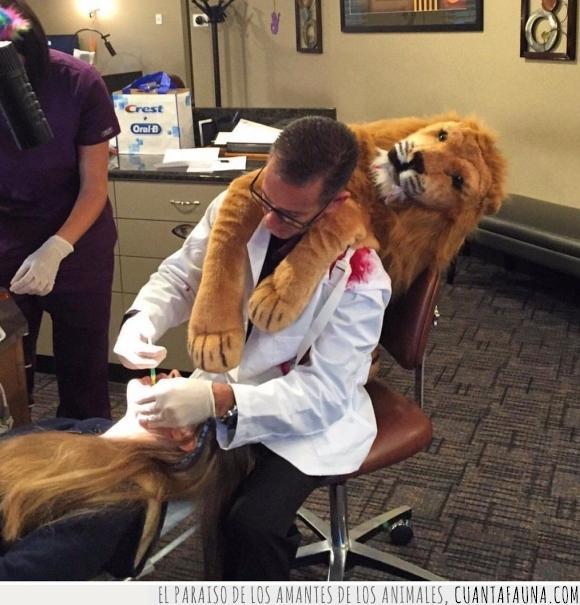 cecil,dentista,disfraz,halloween,leon
