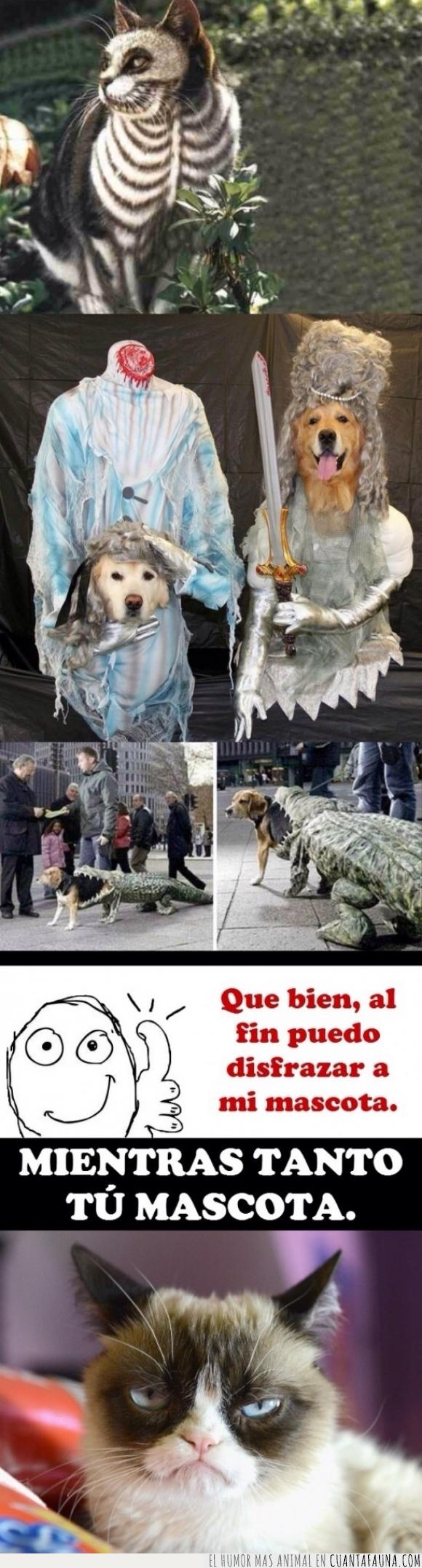 Disfraces,disfraz,disfrazar,gatos,Grumpy cat,halloween,mascotas,perro