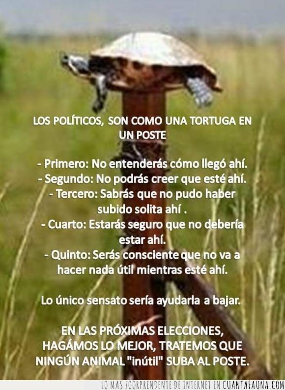 ejemplo,España,españoles,Políticos,por que,rajoy,tortuga