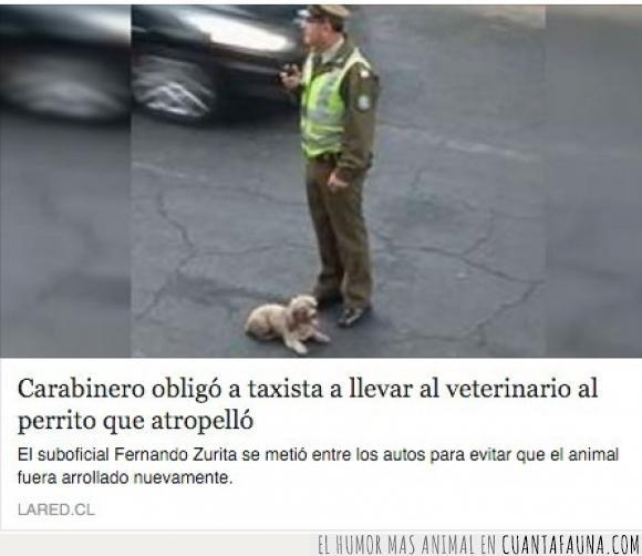 atropellar,carabinero,Fernando Zurita,Italia,perro,policía,salvar,taxista,veterinario