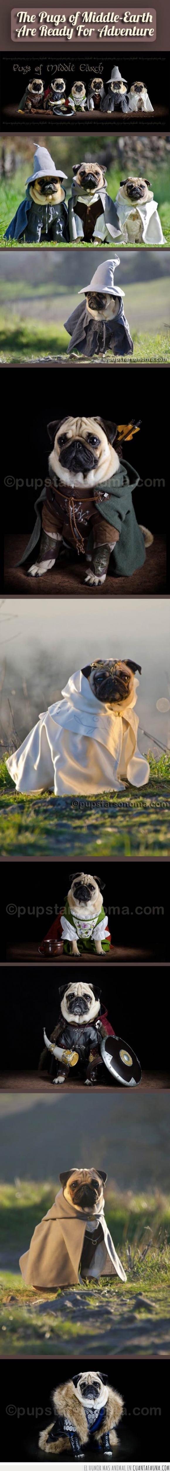 El señor de los anillos,enanos,Frodo,hobbit,perro,pug,Tierra Media