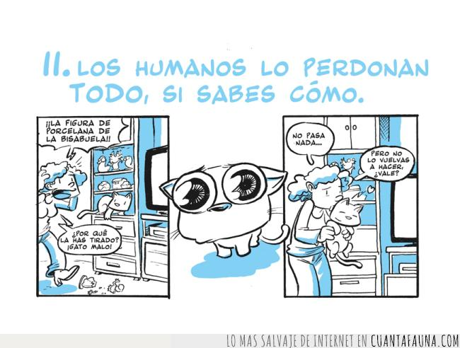 comic,enternecedor,gatos,humanos,perdonar
