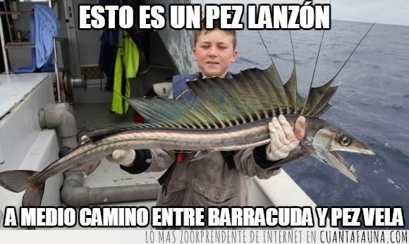 agua,barracuda,bote,combinación,curioso,extraño,mar,pesca,pesquero,pez,pez lanzón,pez vela