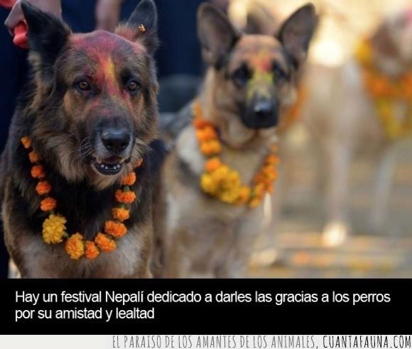 amistad,celebración,festival,fiesta,lealtad,Nepal,nepalí,perro