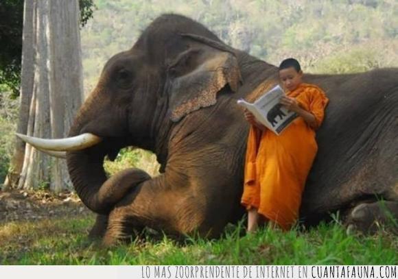 budista,contacto,elefante,monje,naturaleza,niño