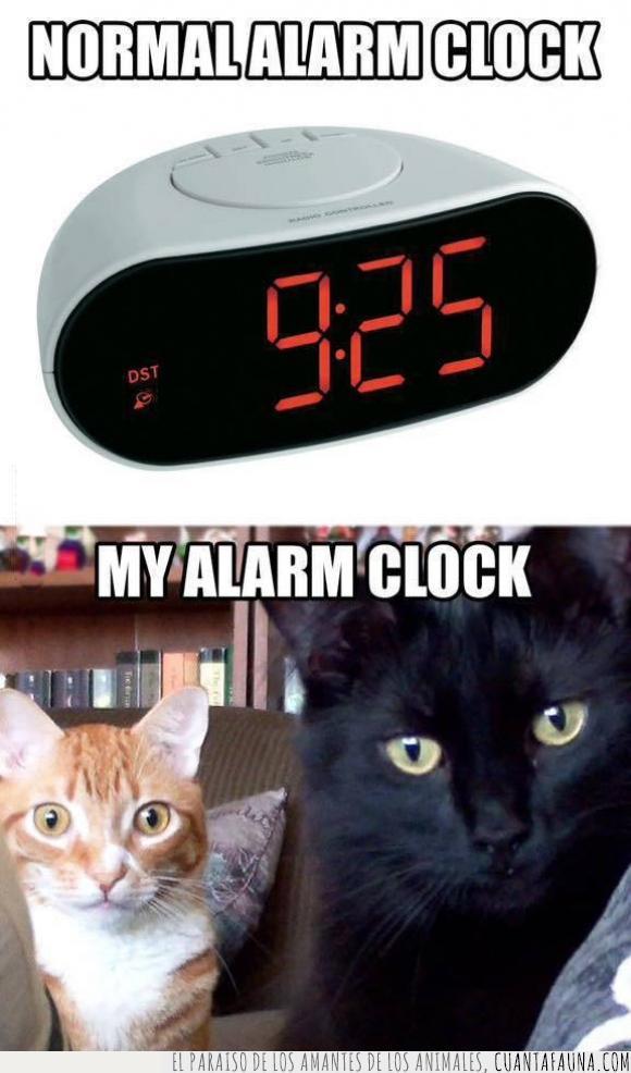 alarma,comer,comida,despertador,despertar,gatetes,gato,hambre