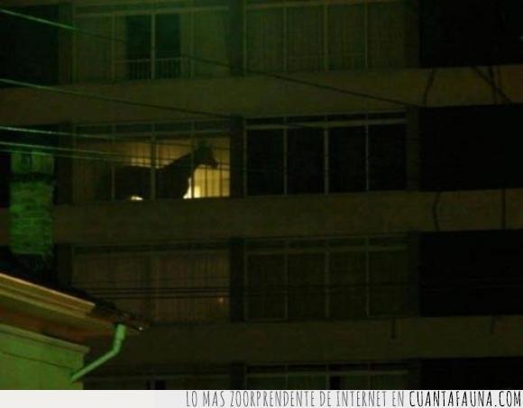 Apartamentos,caballo,cortinas,cuernos,engaña,equino,pisos,silueta