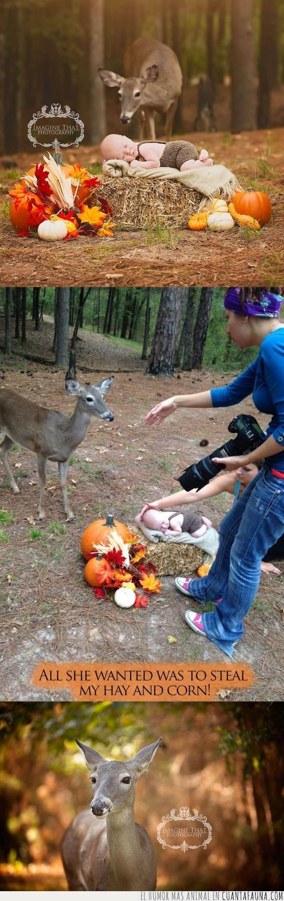 bebe,ciervo,comer,comida,cuento de hadas,fotografía,fotografo,oler,sesión