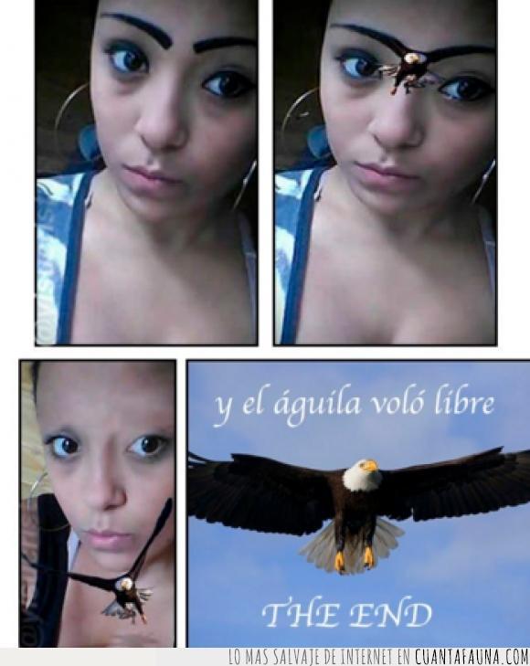 águila,alas,cejas,maquillaje,mujer,volar