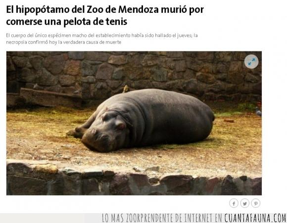 hipopotamo,idiotez,lanzar,morir,muerte,pelota,tenis,tragar
