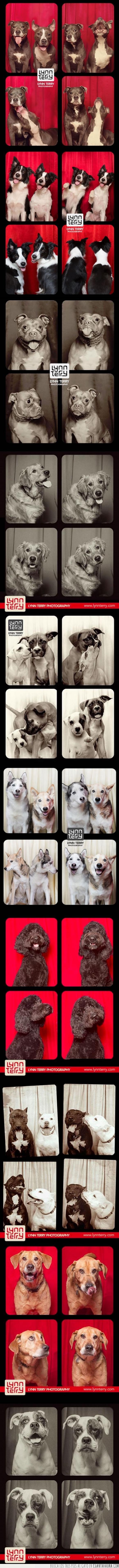 cachorros,efectos,fondos,fotografías,fotos,Perros,Photo Booth