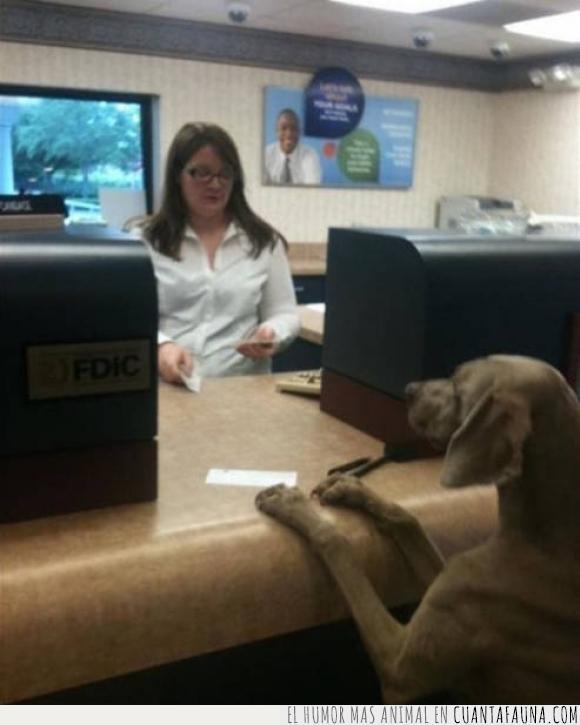 banco,comida,dog chow,hijos,mostrador,papel,perro,trabajadora