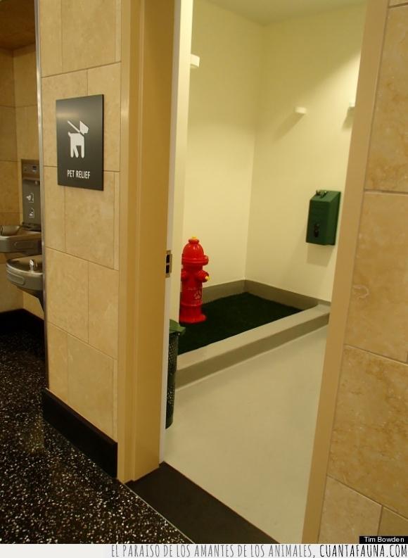 baño,boca,bombero,lavabo,manguera,mascota,perro,pet relief,servicio