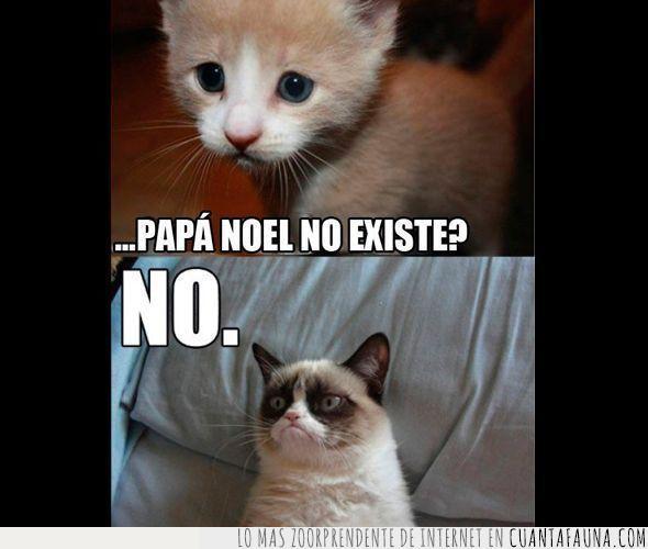 gato,gatos,no,papa noel,pena,triste