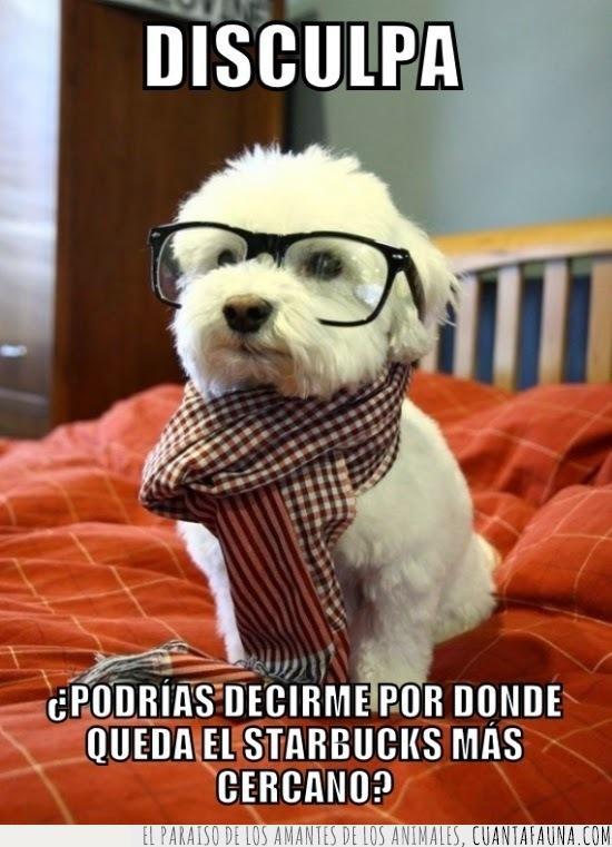 bufanda,gafas,hipster,starbucks