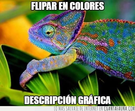 animal,bonito,colores,mola,un monton de colores