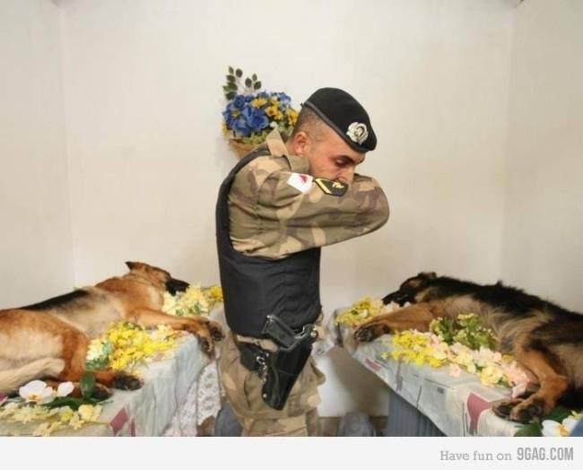 bombas,EEUU,ejército,héroes,militares,perros
