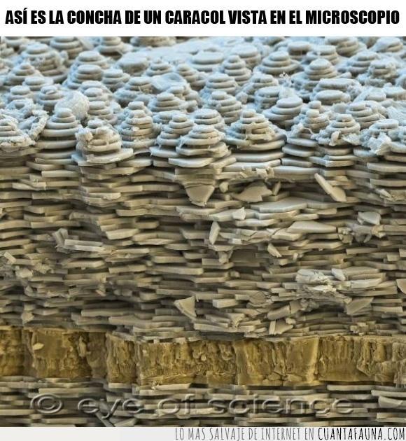 capas,caracol,cerca,concha,forma,macro,micro,microscopio