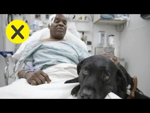 34251 - 10 animales que salvaron vidas humanas