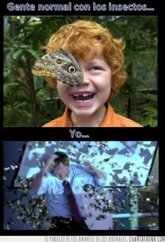 ataque,bicho,diversión,insectos,mariposa,miedo