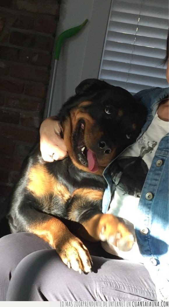 abuela,amor,cara,perrete :D,perro,rottweiler,sonrisa